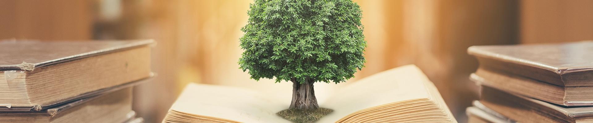 Baum wächst aus Buch